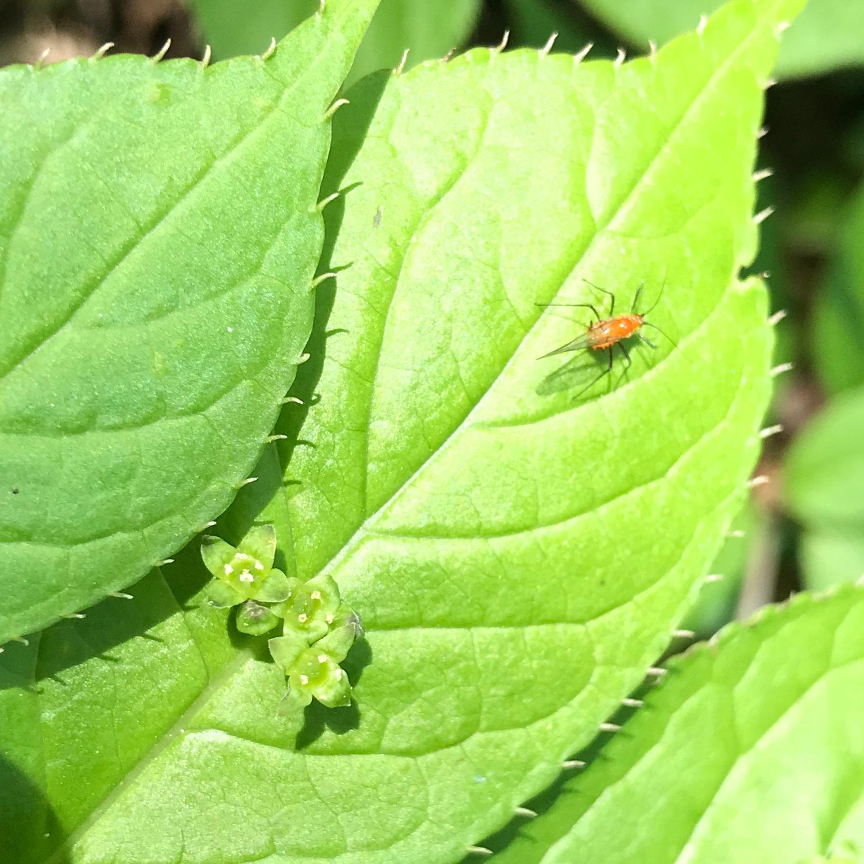 葉っぱと虫